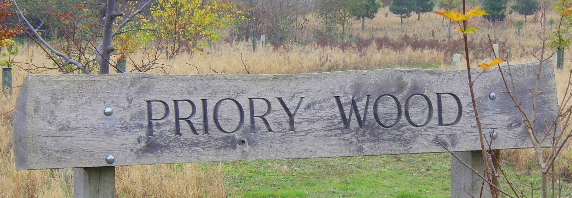 141111 CIMG1230 Priory Wood